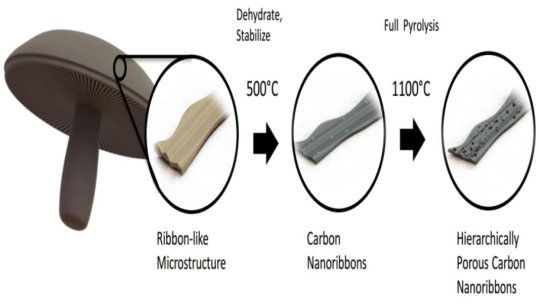 Diagram showing how mushrooms are turned into a material for battery anodes. Credit: Image courtesy of University of California - Riverside